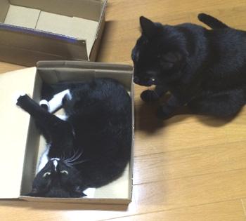 box13.jpg