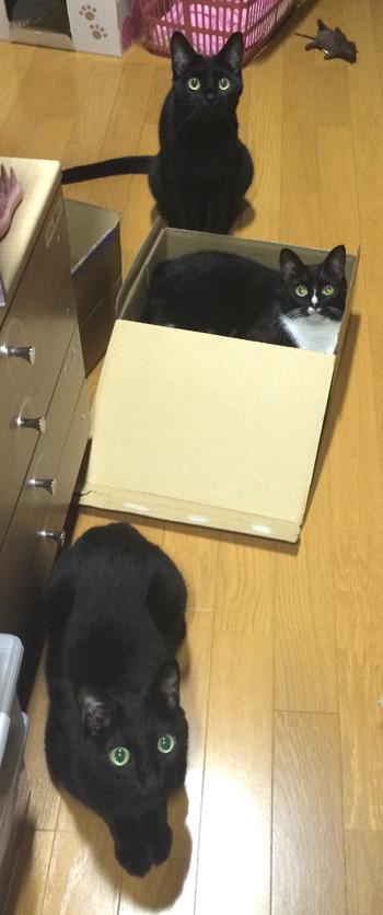 box18.jpg