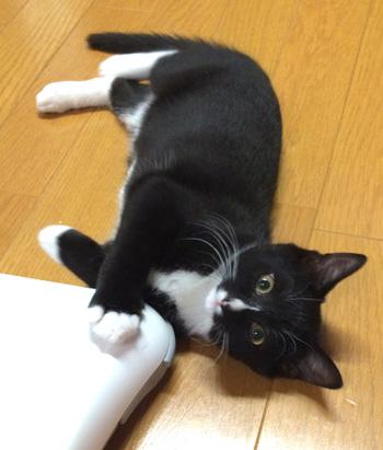 korori2.jpg