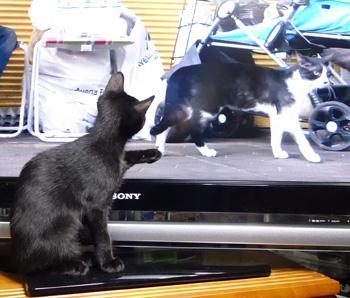 tv9.jpg